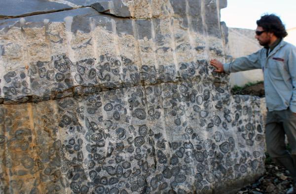 Diorite Stone Slabs : Orbicular granite youanmi terrane